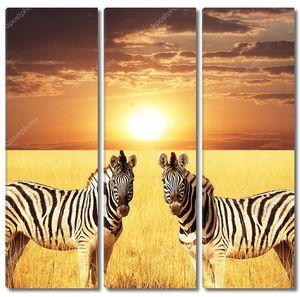 Две зебры на закате