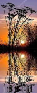 Трава в закате выше воды с отражением