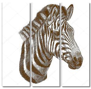 Рисованная голова зебры
