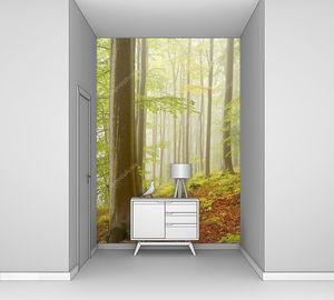 Туманный буковый лес