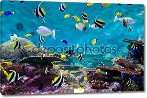 Рыбы и кораллы, подводный мир