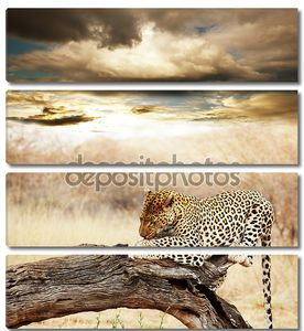 Леопард на дереве на фоне заката