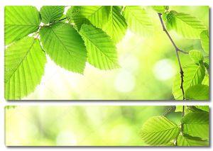 Листья зеленые летом