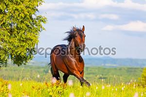 Лошадь на лугу