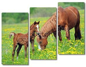 лошадь на зеленой траве