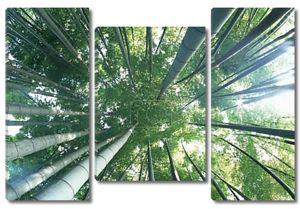 Зеленые бамбуковые джунгли