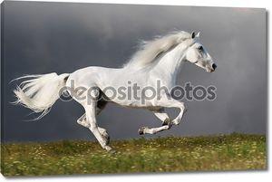 Белая лошадь бежит на фоне темного неба