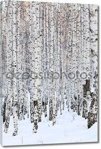 Березовый лес зима, Январь