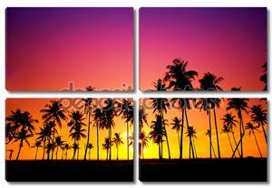 Силуэт кокосовой пальмы на закате