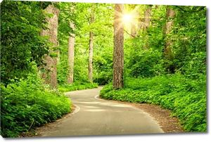 лесная дорога и солнце