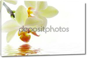 орхидею.