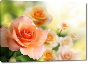 Розы на рассвете