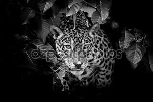 Портрет с леопардом
