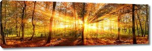 Осенний лес Панорама с яркими солнечными лучами золото