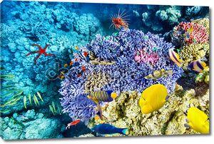 Подводный мир с кораллов и тропических рыб.