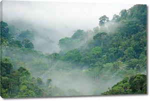 Утренний туман в тропическом лесу