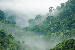 Rainforest утром туман