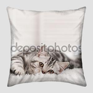 Полосатый кот на белый ковер.