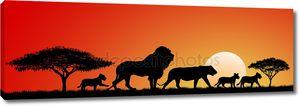 Африканские львы... Львы семья