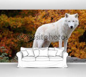 Белый волк на камне