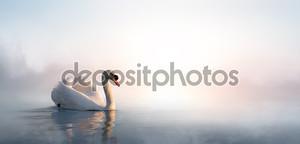 Красивый пейзаж искусство с плавающей на берегу озера лебедя