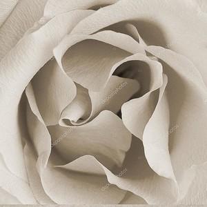 Площадь Винтажные текстуры с Роуз