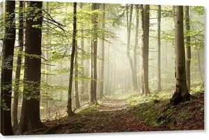 Лесная тропинка на туманное утро осенью