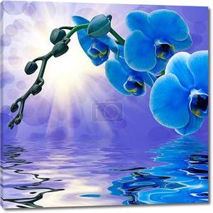 Синяя орхидея над водой