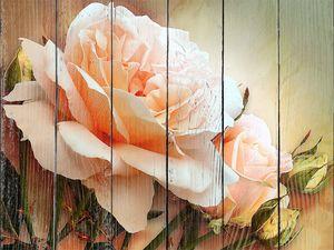 Прекрасная розовая роза