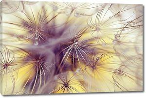 Красивые семена одуванчика с каплями