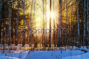 Закат в зимнем лесу