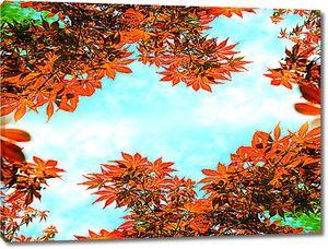 Кусочек неба в осенней листве