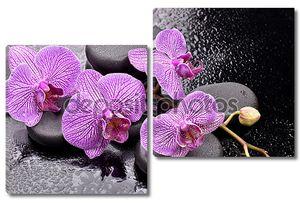 орхидеи на базальтовых камней для спа