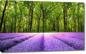 Лавандовое поле перед лесом