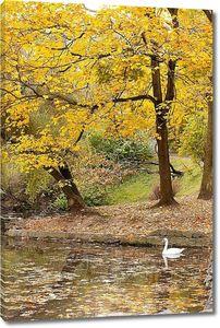 Озеро с лебедем в Осенний парк