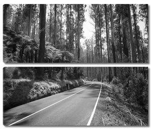Лесная дорога черный и белый