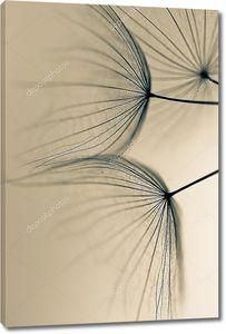 Одуванчик семена обращается на белой кирпичной стене. Семена одуванчика
