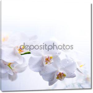 Белый цветок весны орхидей на воде