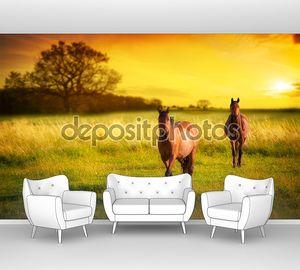 Лошади на  лугу закате