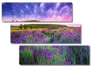 Закат над летней лавандовое поле в Тихань, Венгрия