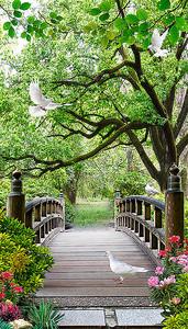 Мостки из досок в лесу