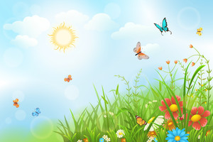Бабочки на лужайке