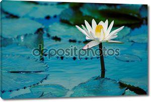 вода lilly