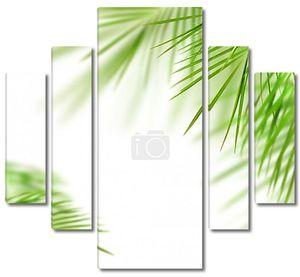 зеленая пальма