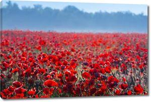 Красное поле Маков в голубой дымке