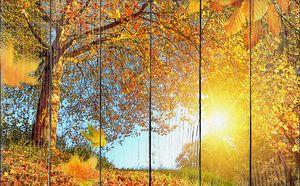 Солнце пробивается через листву
