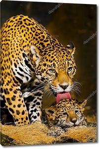 Ягуар и детенышь