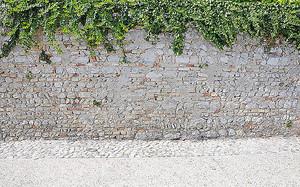 Вьюн на старой стене