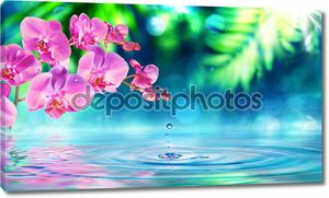 Орхидея в Дзен-саду с капли на пруду