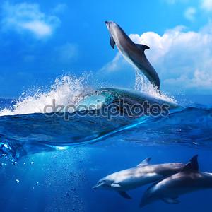 Дельфин, прыгая от взлома серфинга волны и его семьи underw